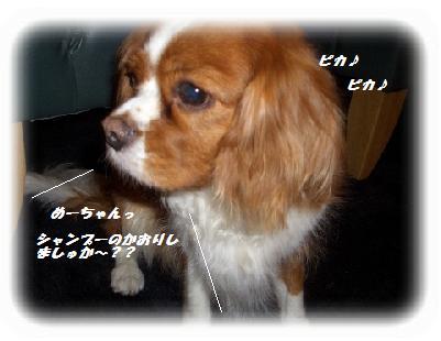 (1)furo-F.jpg