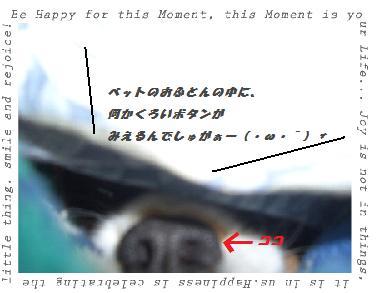 (A)botann-3.jpg