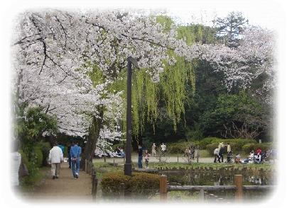hanami-11.jpg