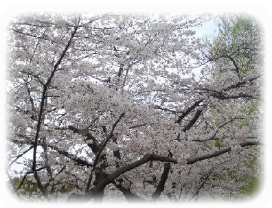 hanami-9.jpg