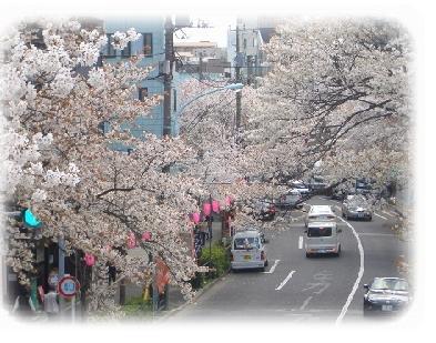 hanami-G.jpg